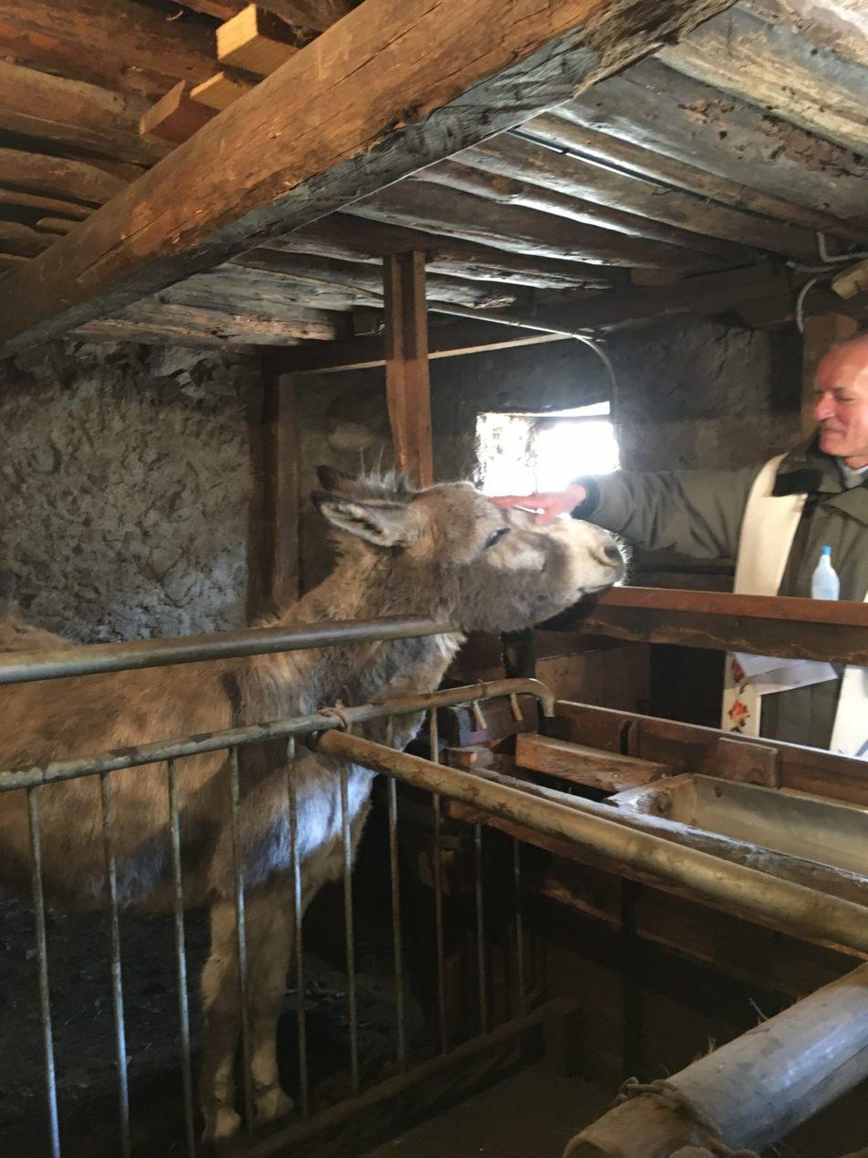S. Antonio Patrono del paese, si rinnova il rito della benedizione delle stalle