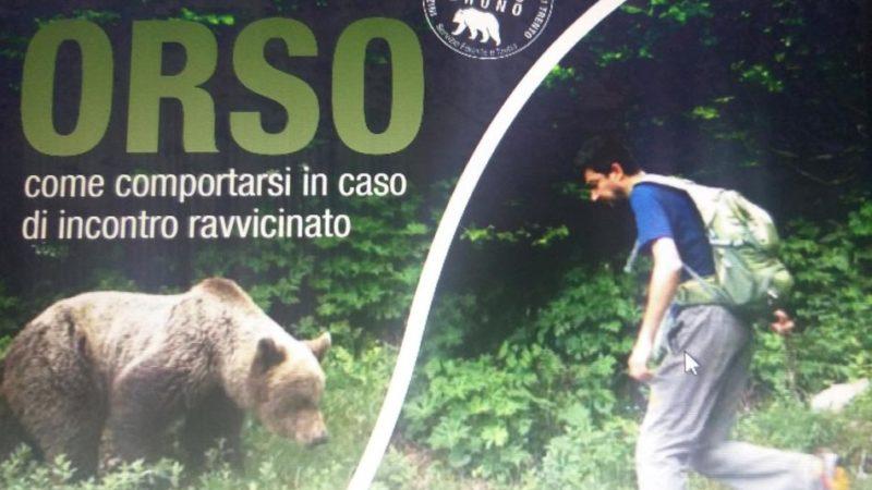 L'orso e il ragazzo: incontro ravvicinato sopra Sporminore