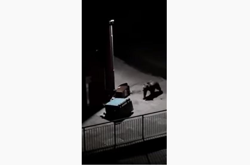 """Ecco il video dell'orso """"beccato"""" a fare il teppista alla casa Cantoniera del Passo del Tonale"""