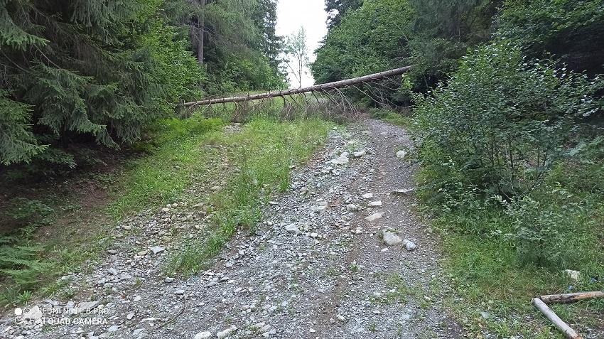 L'albero che blocca l'accesso al secondo tratto di veccia pista da sci