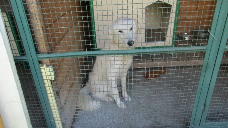 Trovata questa mattina a Pinzolo, presso il parco pineta, questa dolce cagnolona di circa un anno