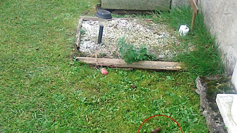 Escrementi di cane nel cimitero di Pinzolo: vergogna!