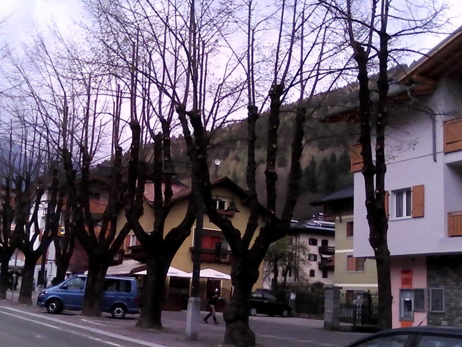 Pinzolo: completata la potatura dei tigli lungo corso Trento