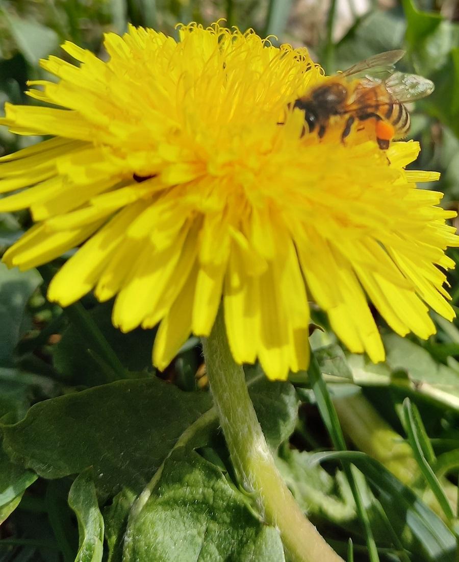 È nata l'Associazione apicoltori Val Rendena