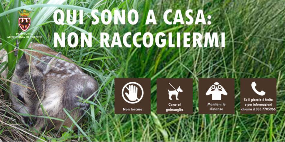 """Piccoli di cervo e capriolo acquattati nell'erba: """"Non toccateli!"""""""