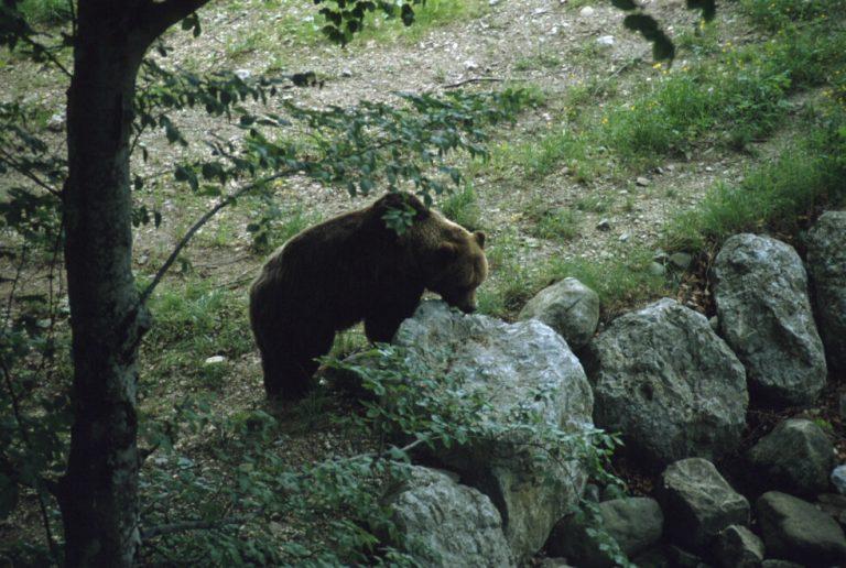 Il Parco racconta: Gli animali del Parco, impariamo a conoscere le loro caratteristicheper tutelare i loro spazi
